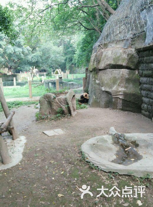 重庆动物园图片 - 第2张