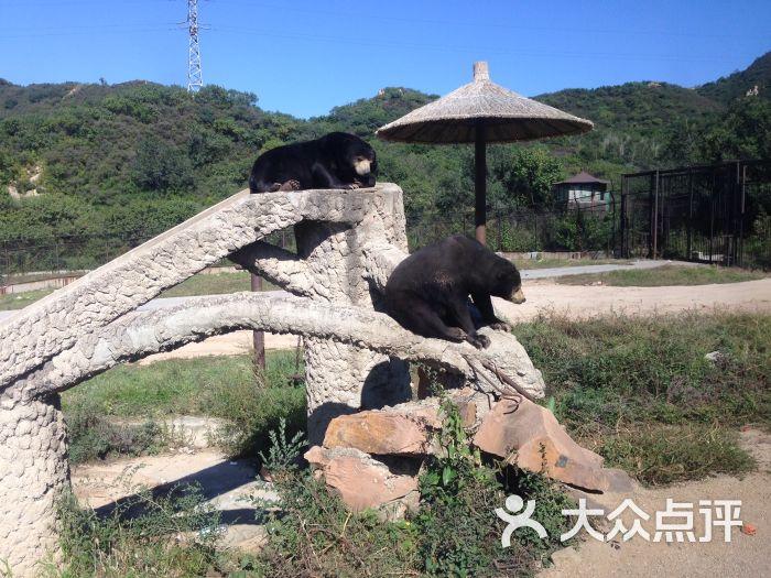 八达岭野生动物世界-图片-延庆县景点-大众点评网