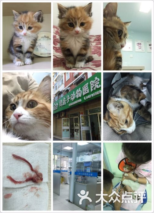 绿房子动物医院-图片-北京宠物-大众点评网
