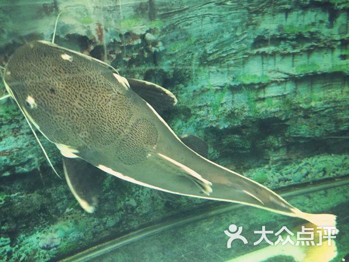 红山森林动物园-图片-南京景点-大众点评网