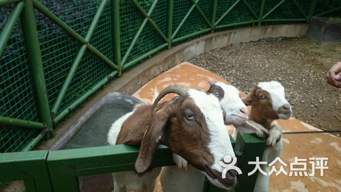 杭州野生动物世界-图片-富阳景点-大众点评网