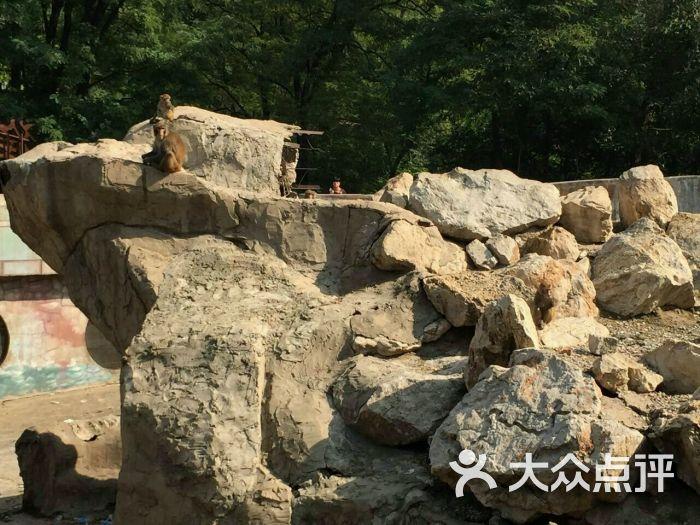 大城山动物园-图片-唐山景点-大众点评网