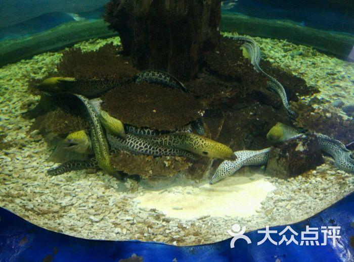 壁纸 动物 海底 海底世界 海洋馆 水族馆 鱼 鱼类 700_519