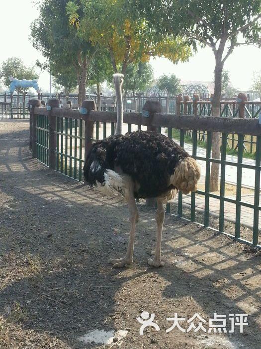 光合谷动物园-图片-天津景点-大众点评网